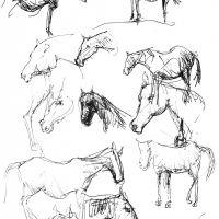 cavalli a matita