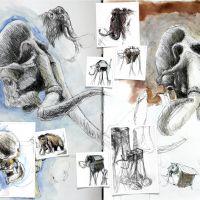 Mammuthus Belli