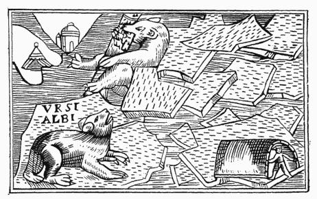 orso polare-olaus magnus